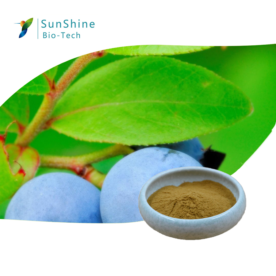 Blueberry Leaf Extract