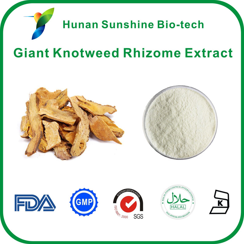 Giant knotweed rhizome extract,resveratrol,plant and herbal extracts
