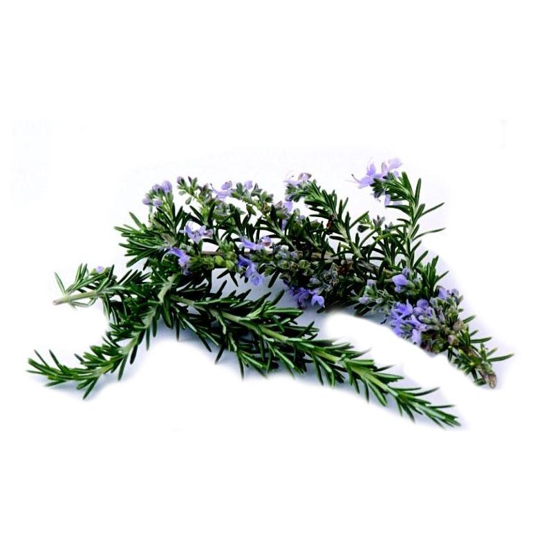 Carnosic Acid,Rosmarinic acid,Rosemary Extract