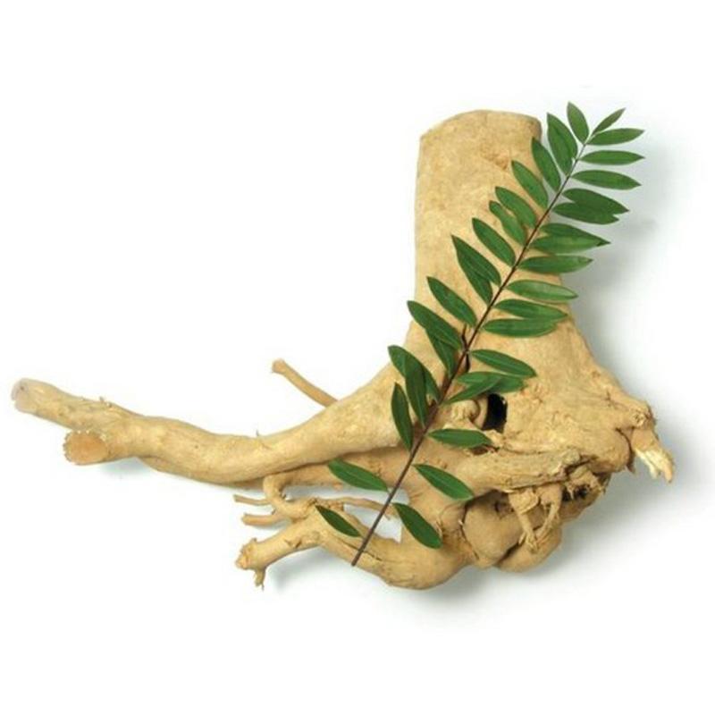 Eurycoma Longifolia Jack,Tongkat Ali Extract,Tongkat ali