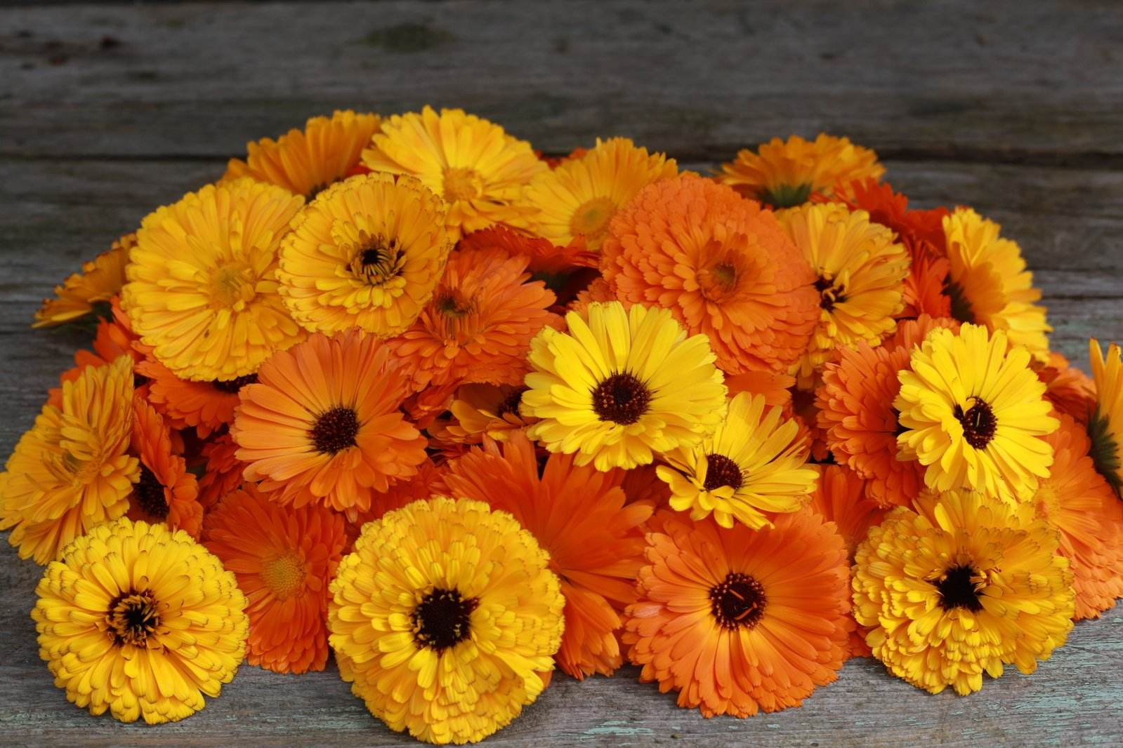sunshine,health,Marigold,herbal extract,Tagetes erecta