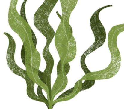 sunshine,health,Fucoidan,herbal extract