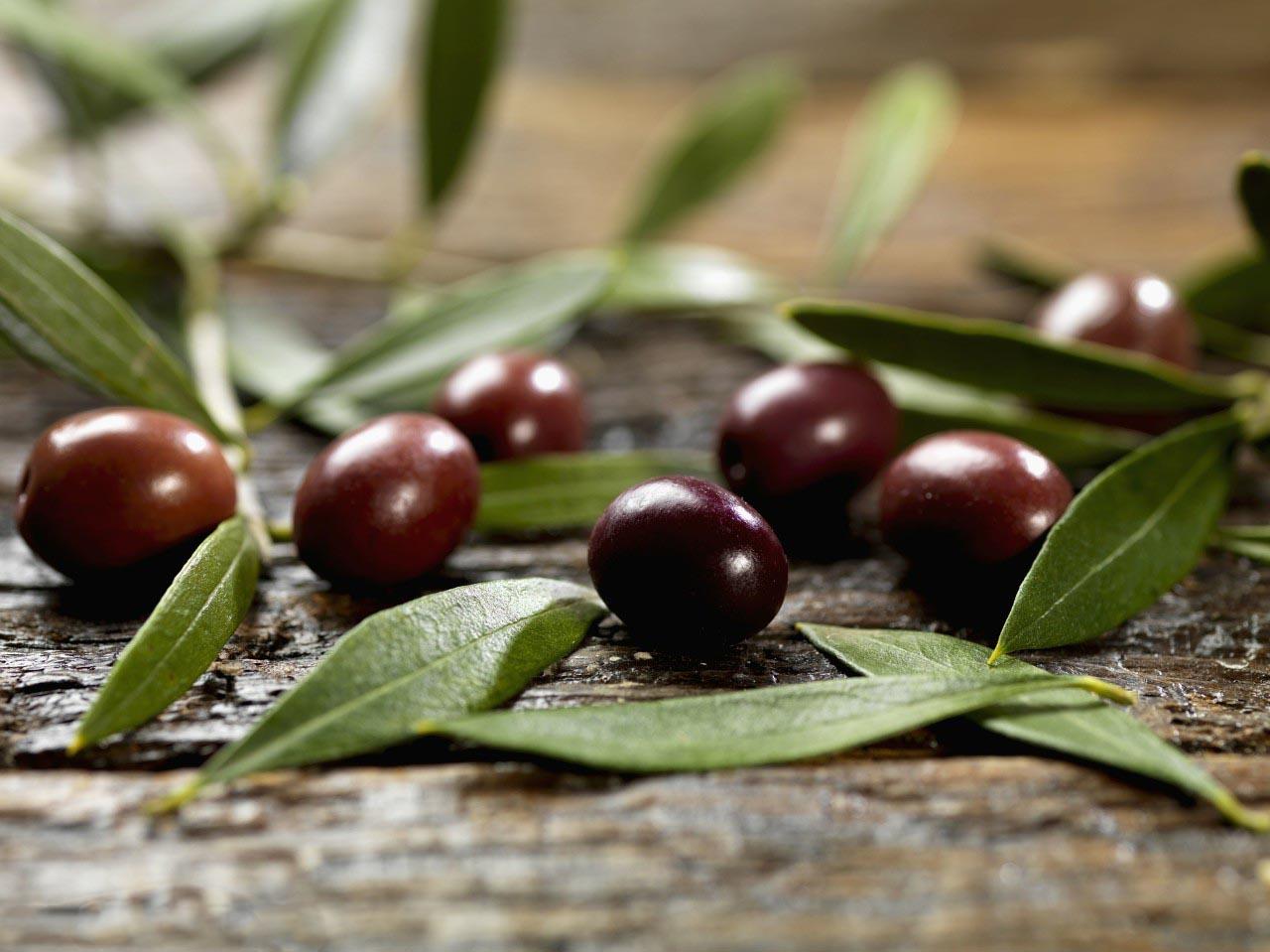 sunshine,health,Olea Europaea Leaf,herbal extract,Olive leaf