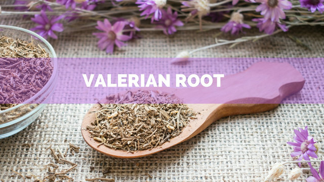 valerian root-anxiety-insomnia-health care-sunshine-sqt