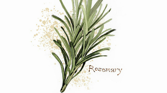 Rosemary-skin care-sunshine-sqt-healthy life